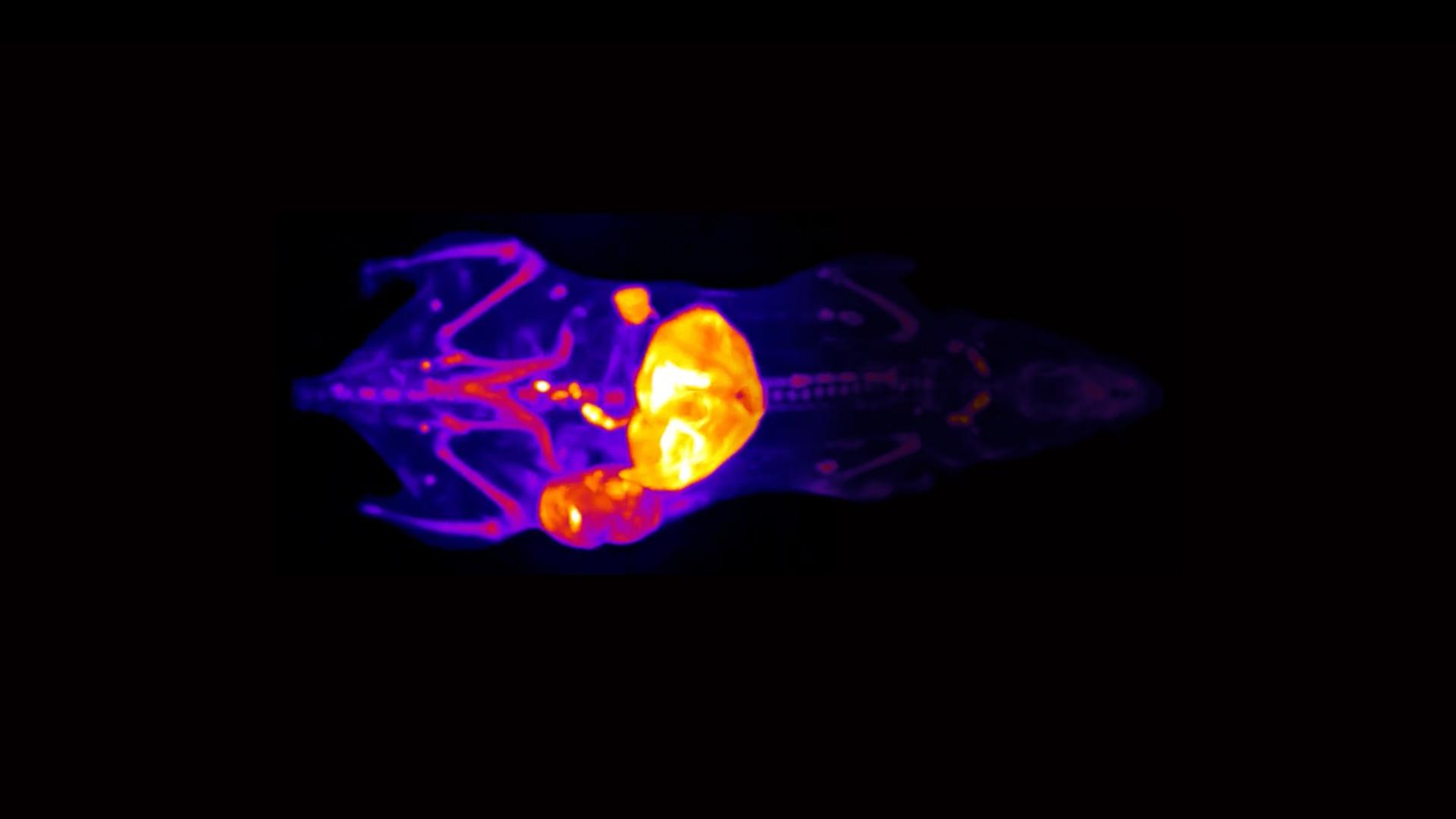 tissue-3D-image-1