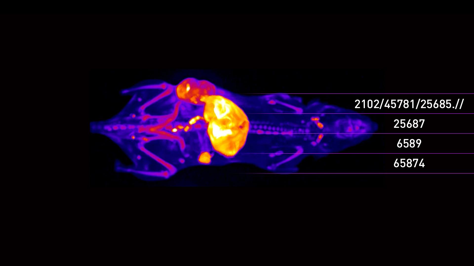 tissue-3D-image-3