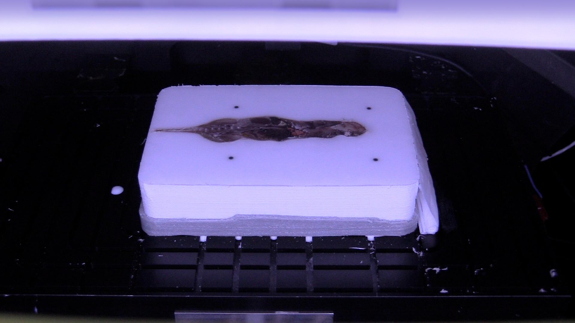 tissue-slicing-3